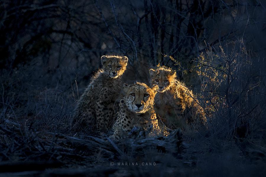 Jacomina & cubs by Marina Cano on 500px.com