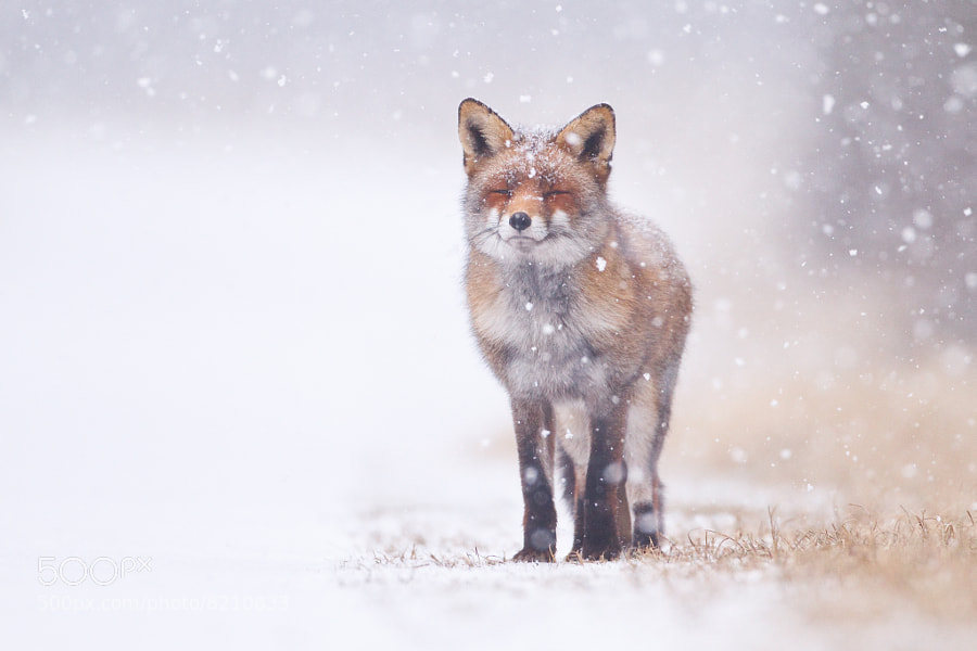 Photograph Winter wonderland by Pim Leijen on 500px