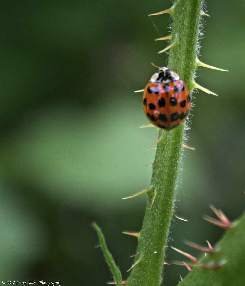 Photograph The Ladybug by Doug Alder on 500px