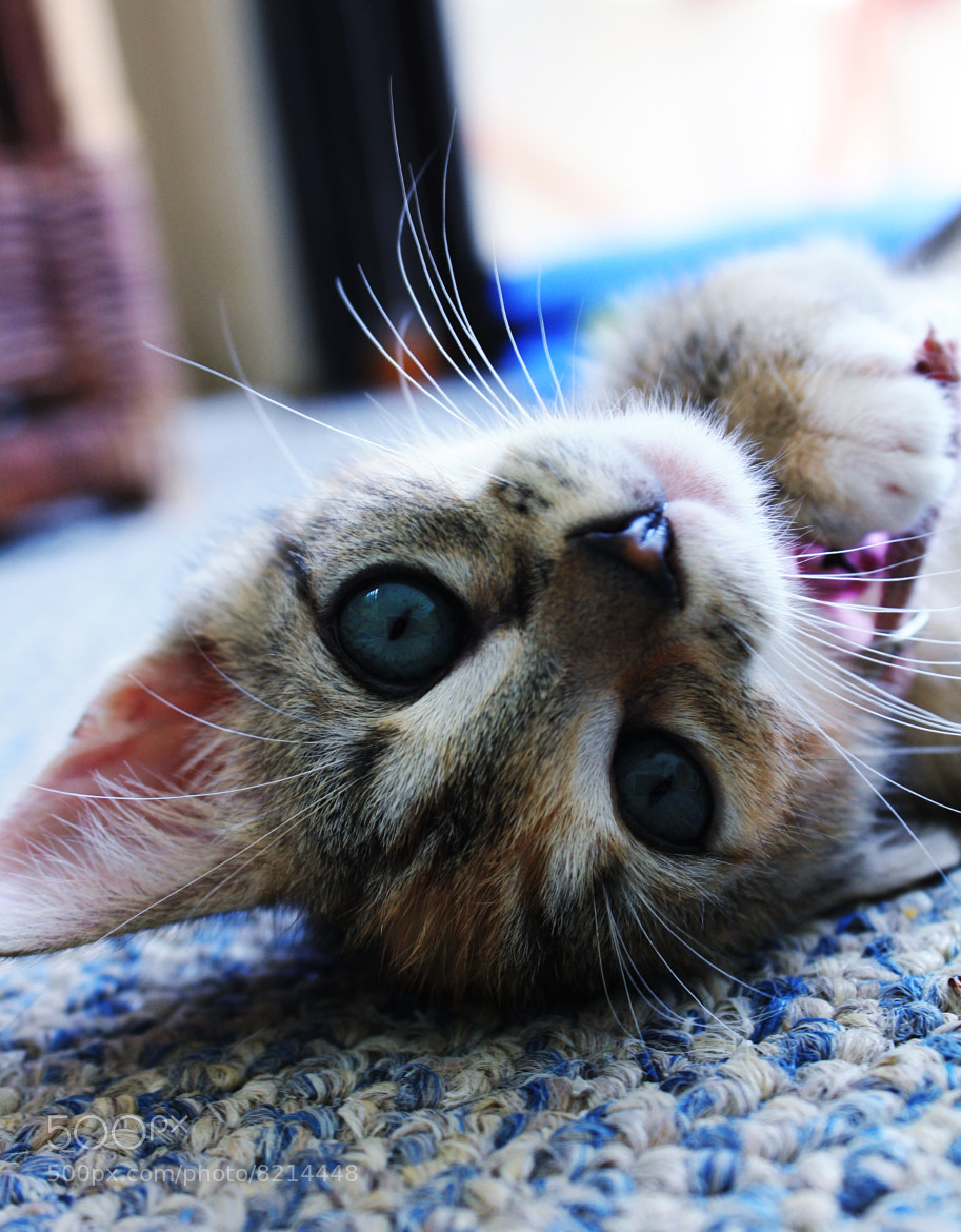 Photograph Kitty Play by Heike Accorsi on 500px