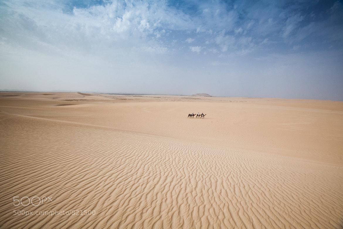 Photograph The Sahara by Dave Brosha on 500px