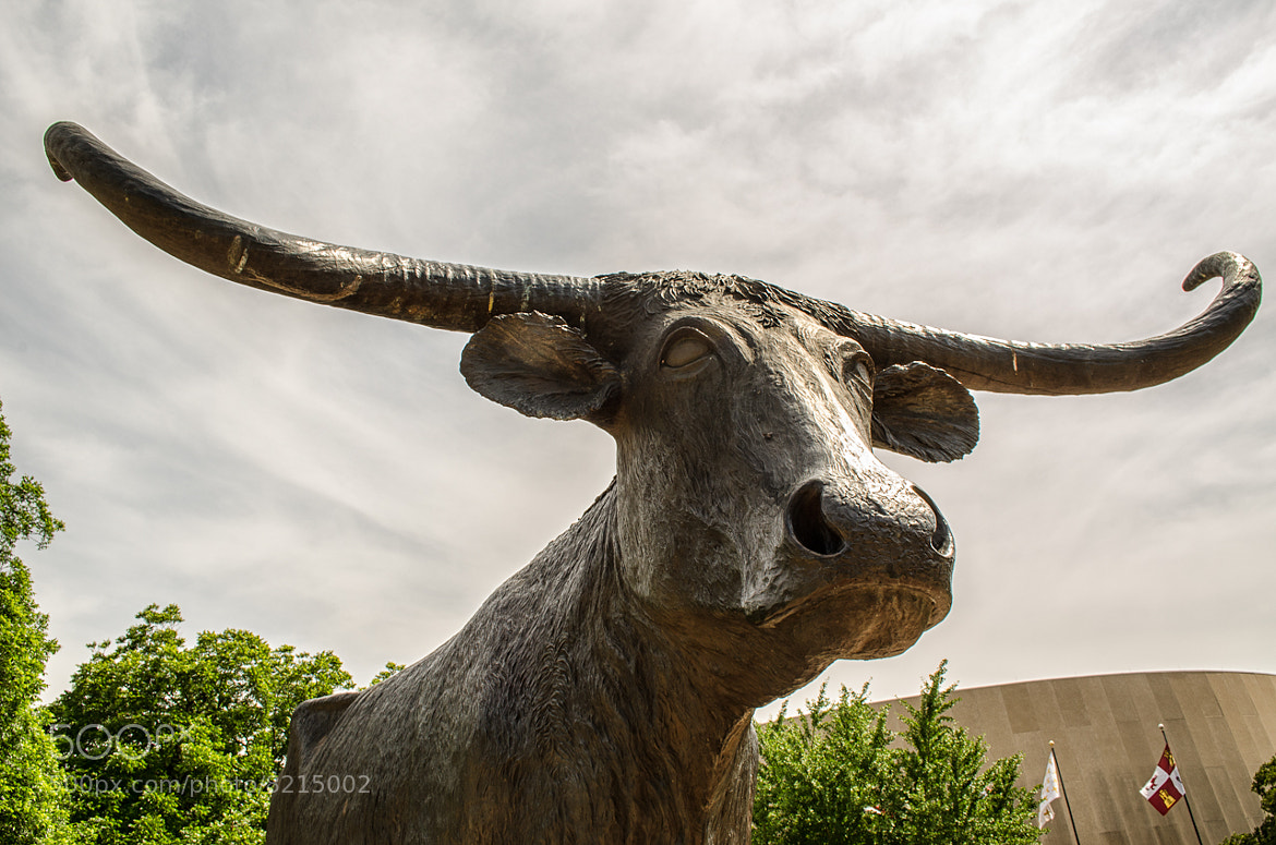 Photograph Bevo in Bronze by David Swinney on 500px