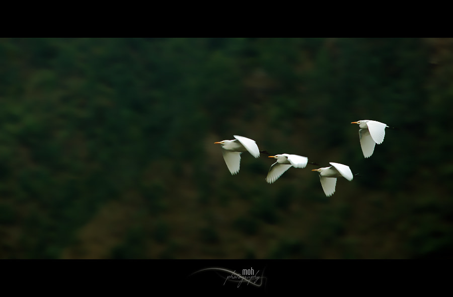 Photograph Fly Away Home by Mohan Duwal on 500px