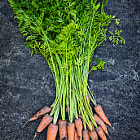 Постер, плакат: Fresh carrots from garden