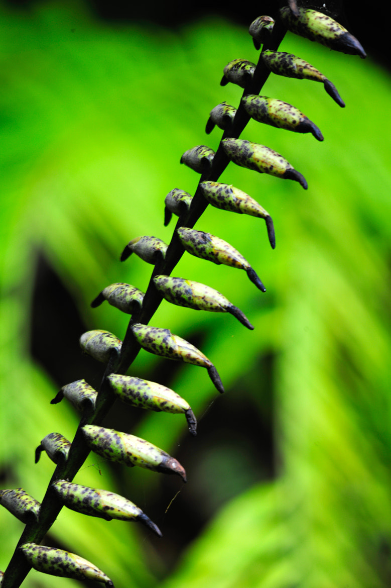 Photograph Monteverde by Sergio Quesada on 500px