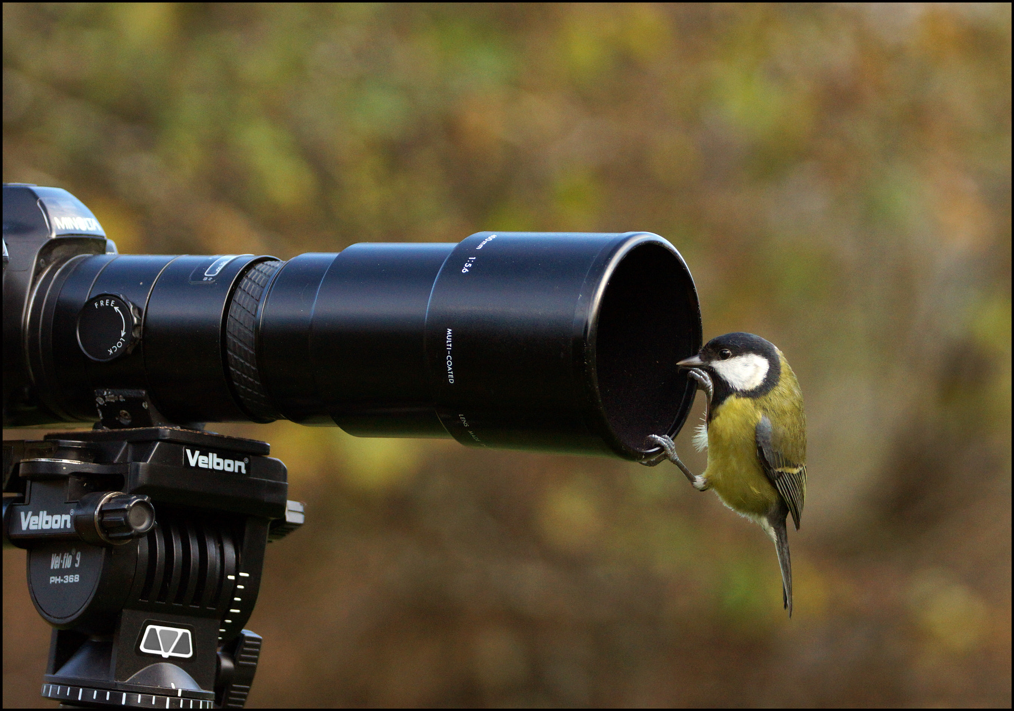 Photograph Am I close enough? by Mike Turtle on 500px