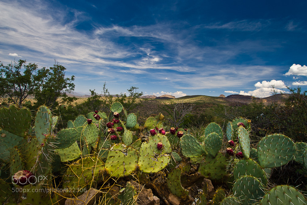 Photograph Prickly View by Jeff Revell on 500px