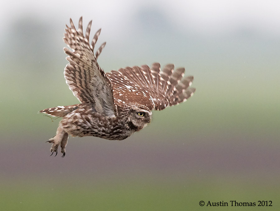 Photograph Heading back to the nest... by Austin Thomas on 500px