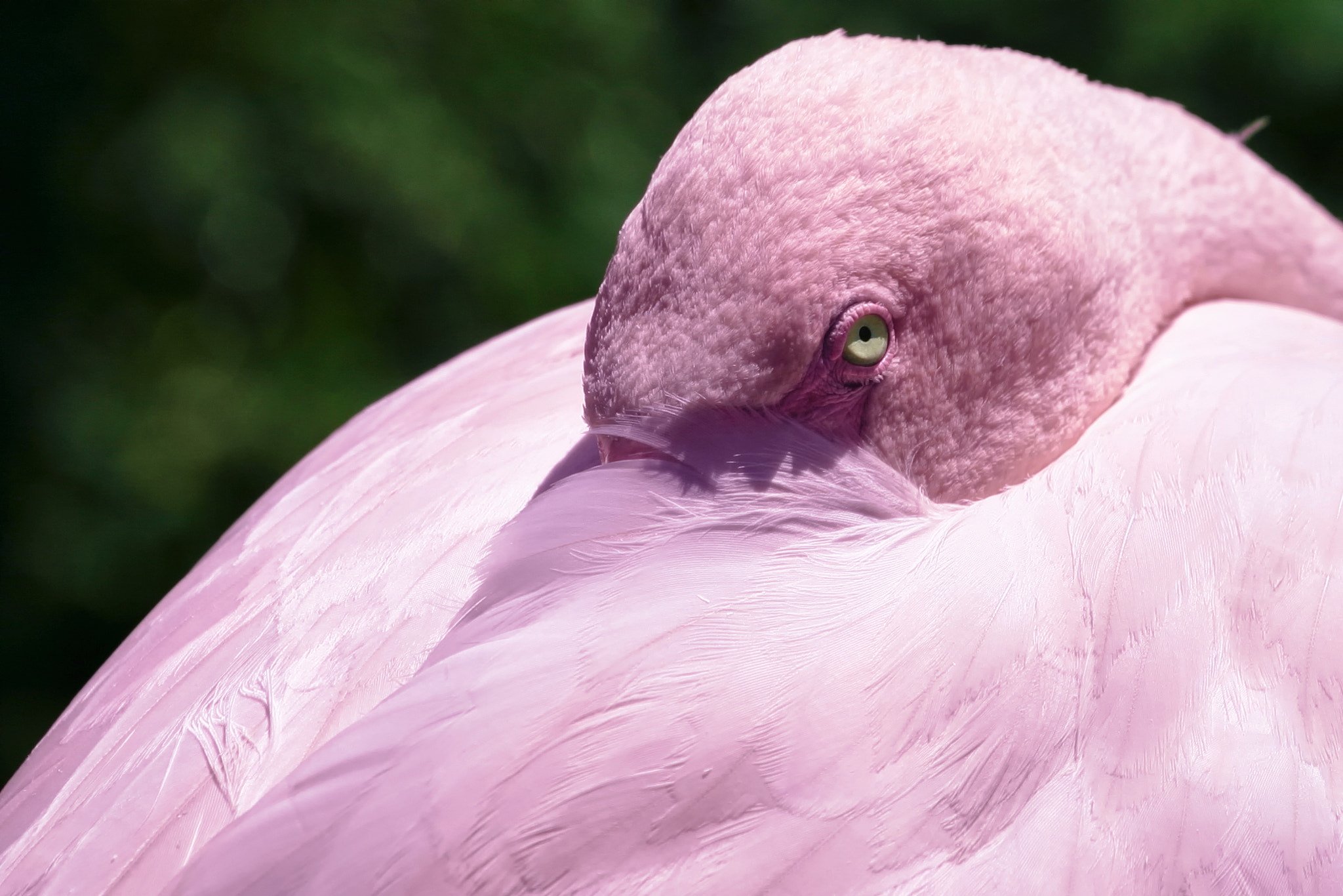 Photograph Pink by Tommy Persson on 500px