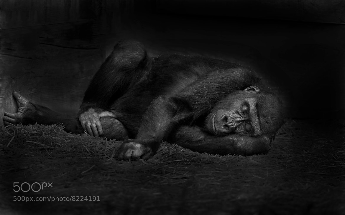 Photograph Sleeping! by Sue Demetriou on 500px