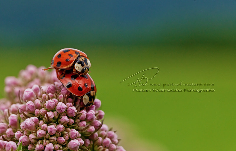 Photograph Love is in the air... by Florian Warnecke on 500px