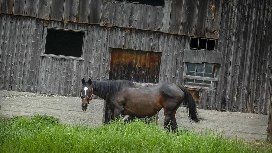 Textures Tones Barn & Horse BoydFarm