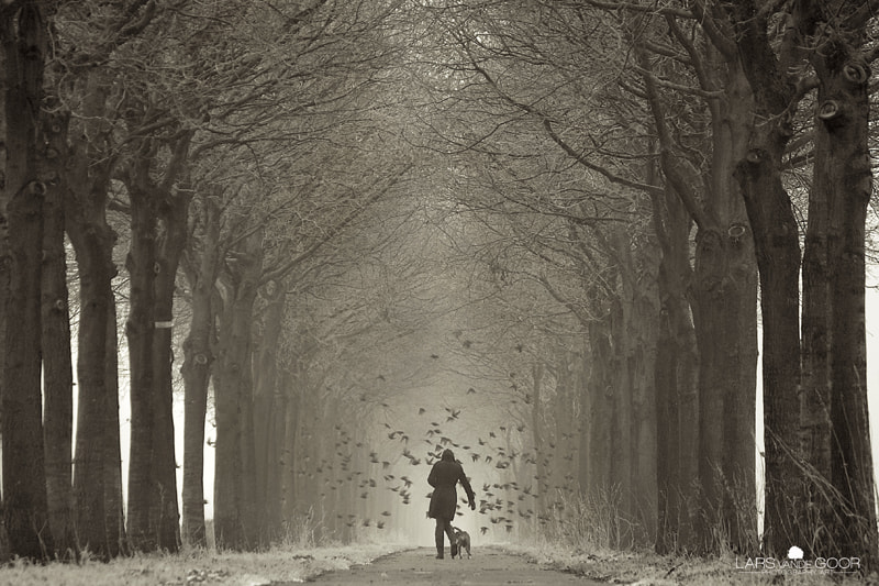 Photograph Hitch the road Jane rld by Lars van de Goor on 500px