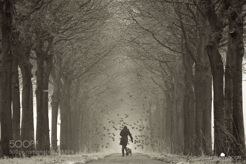 Photograph Hitch the road Jane rld by Lars van de Goor on 500px