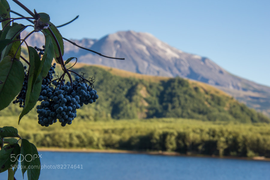 Photograph Fruit of St. Helens by Andy Zahn on 500px