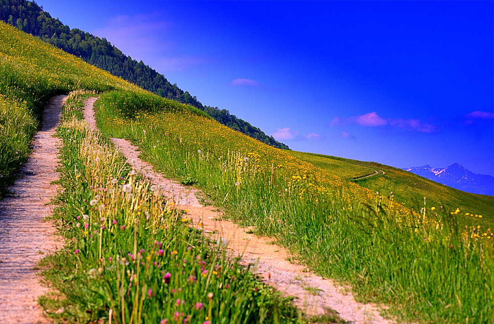 Photograph the path by Roman Seeleitner on 500px