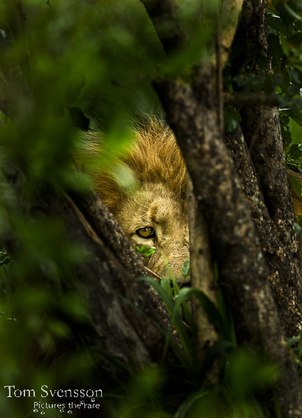 Photograph Watching you by Tom Svensson on 500px