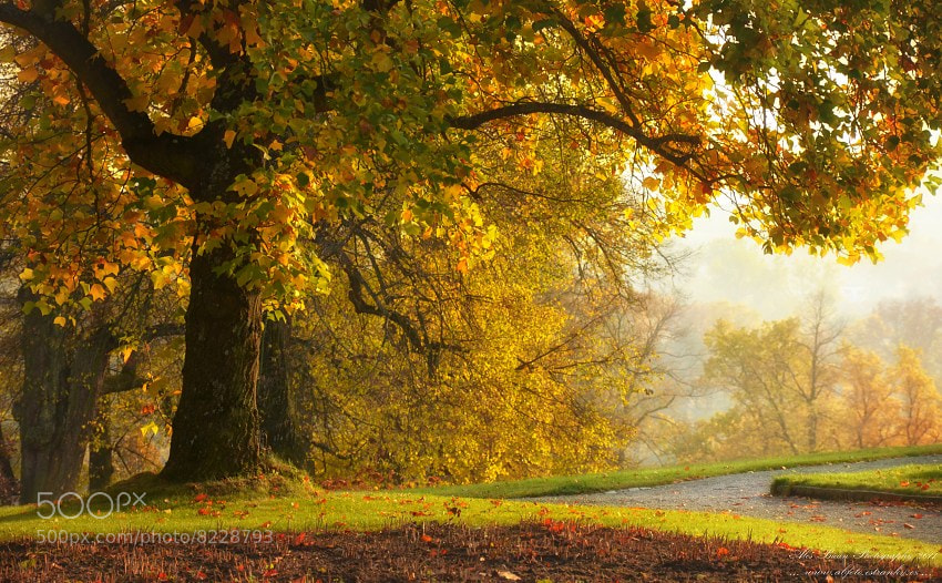 Photograph ... Autumn ... by Aleš Bican on 500px