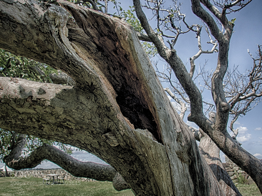 Photograph Gnarled by John Poltrack on 500px