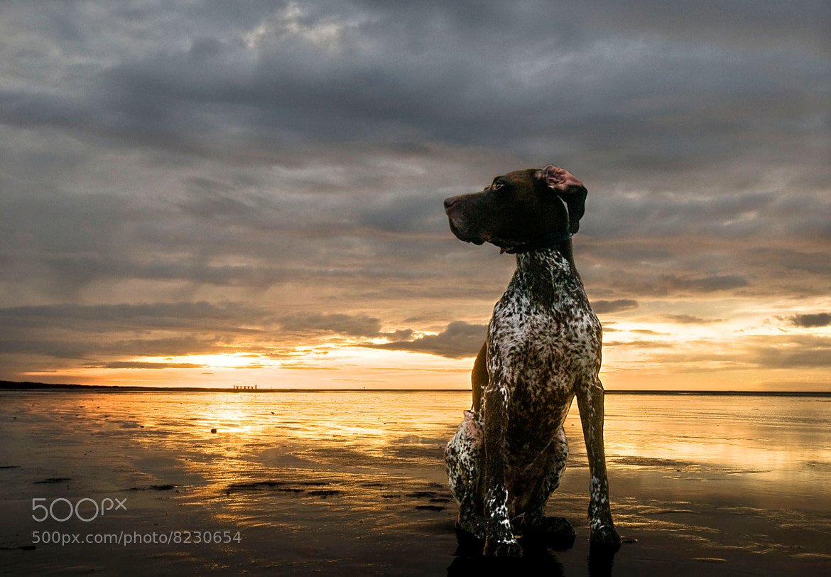 Photograph Dog by Sunset by Daniel Bosma on 500px