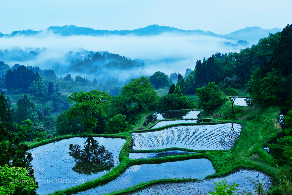 Photograph After the rain by MIYAMOTO Y on 500px