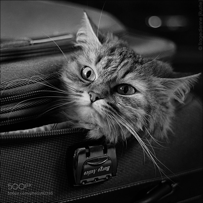 Photograph [Fluffy Luggage] by Tragedienne [Rustle] on 500px