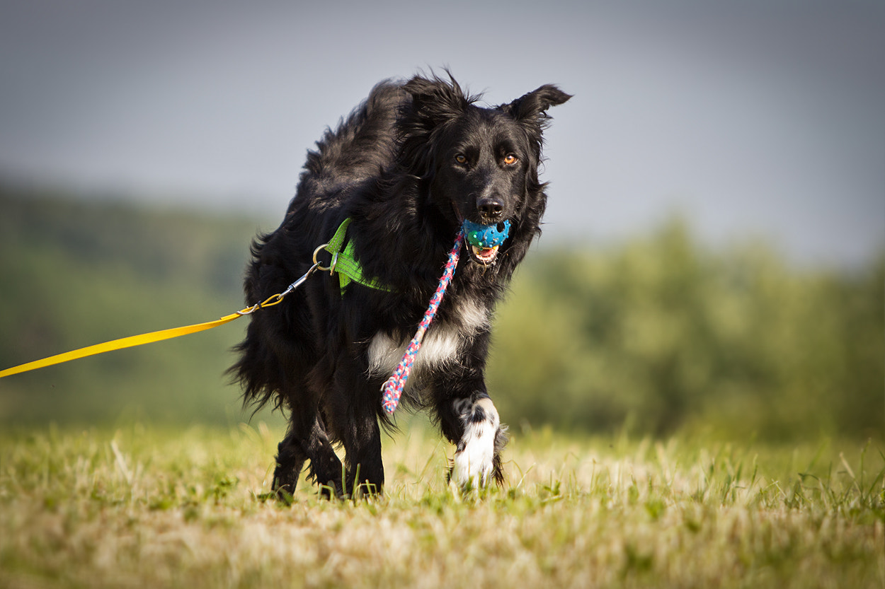 Photograph dog-fetch-line .-)) by Mathias Ahrens on 500px