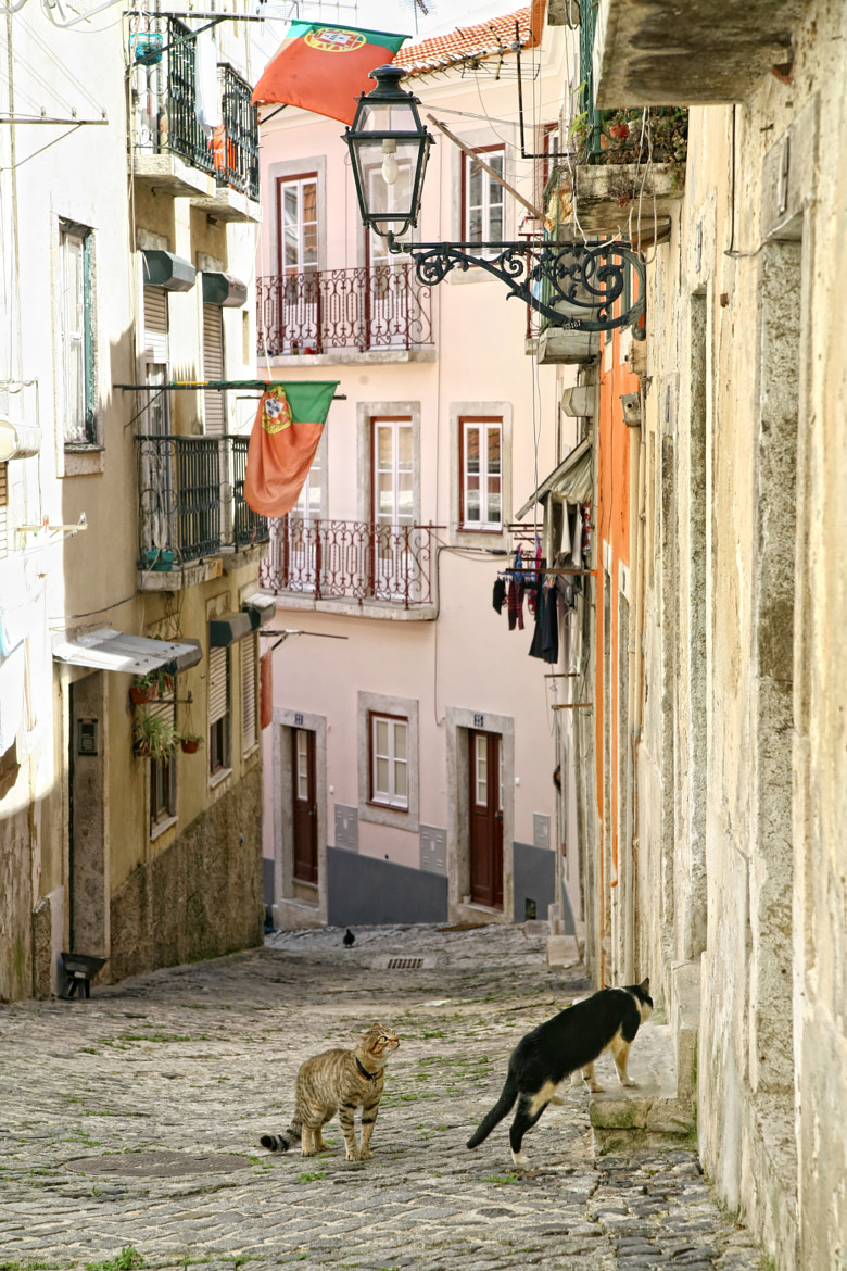 Photograph Cats in Alfama. by Nessa  G. on 500px