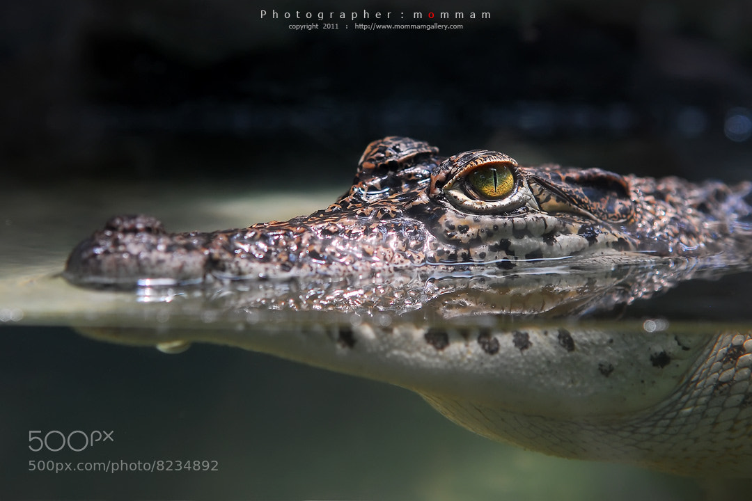 Photograph croc... by mommam 777 on 500px