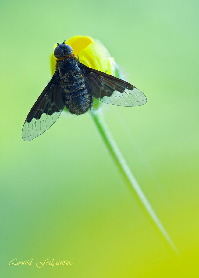 Photograph A Prototype Of Mayan Aircraft by Leonid Fedyantsev on 500px