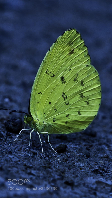 Photograph yellow by Budi Gunawan on 500px