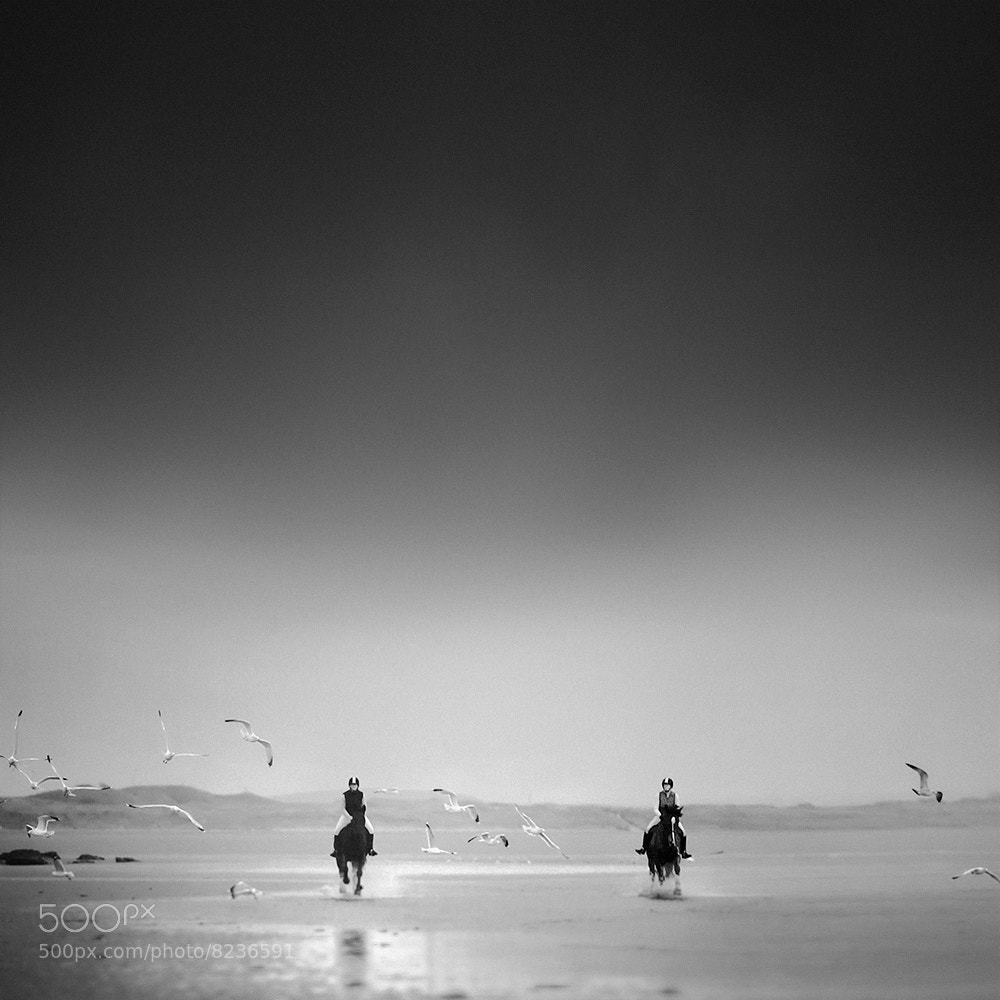 Photograph See Horses > See Gulls by Andy Lee on 500px