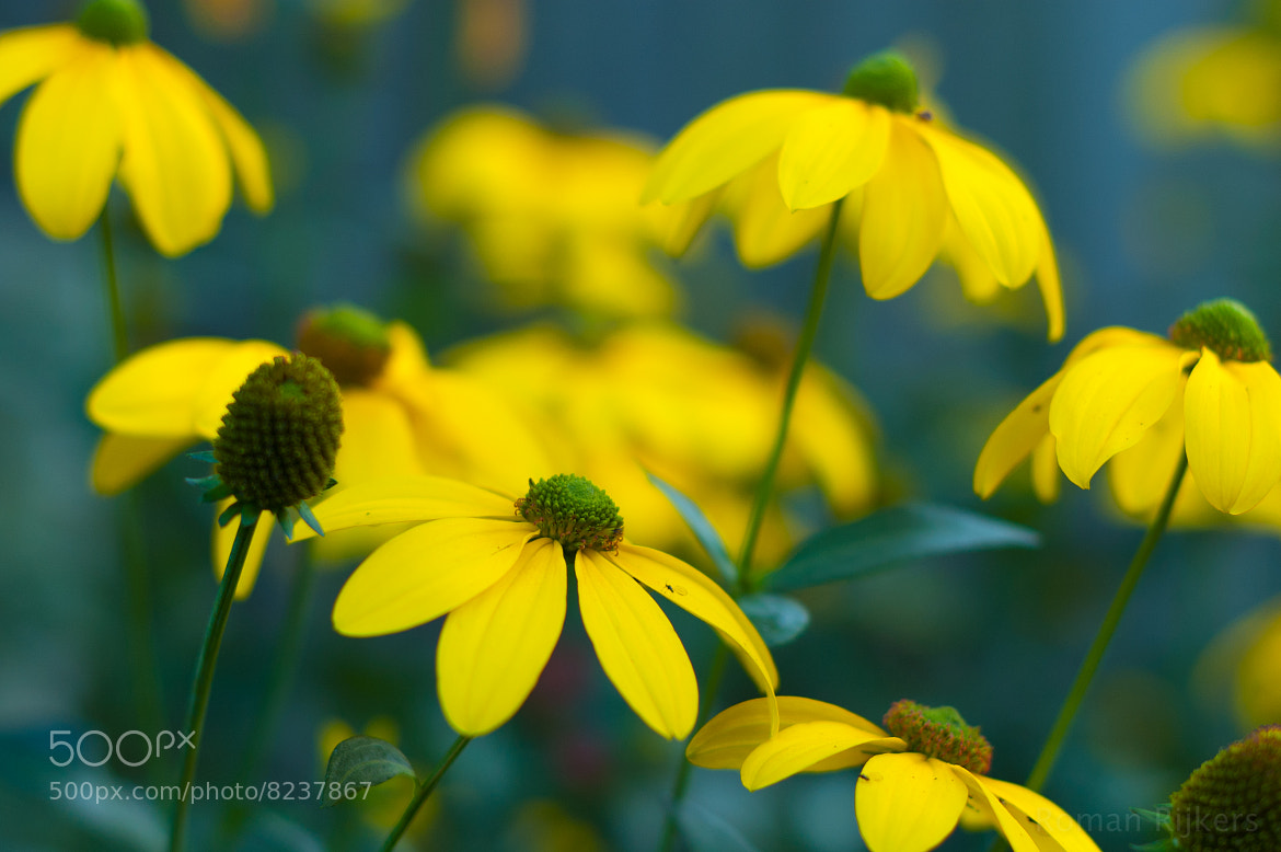 Photograph Yellow bokeh flowers by Roman Rijkers on 500px