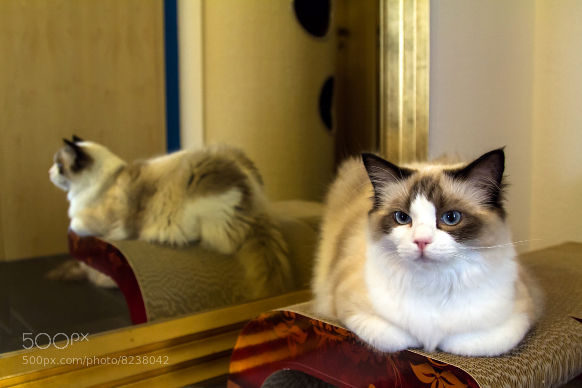 Photograph Cat's Life by Philipp K on 500px