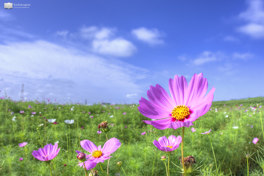 Photograph Cosmos by Yos Kawapon on 500px