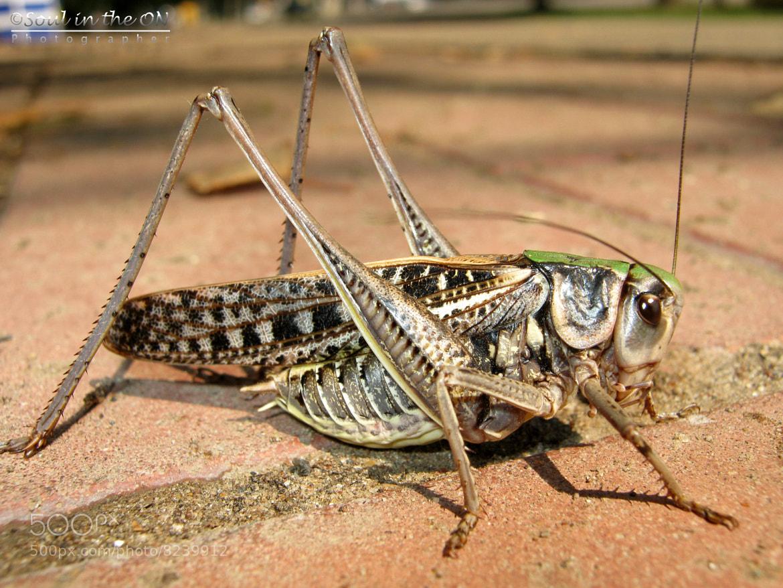 Photograph grasshopper by Katya Мedvedeva on 500px