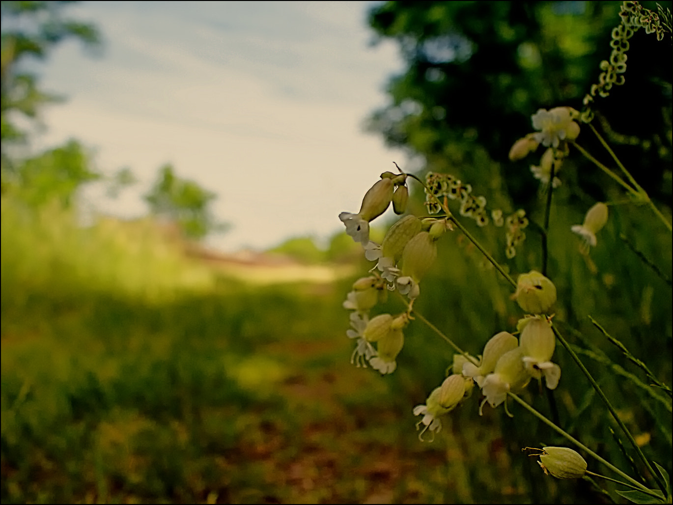 Photograph Summertime by RobN 185 on 500px