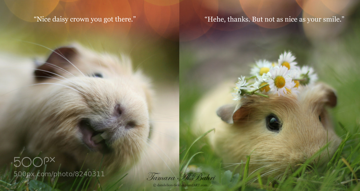 Photograph Guinea Pig Love by Tamara Al Bahri on 500px