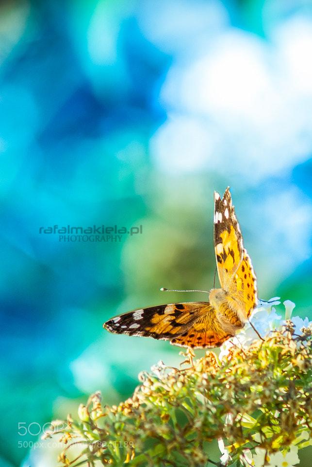 Photograph butterfly by Rafał Makieła on 500px
