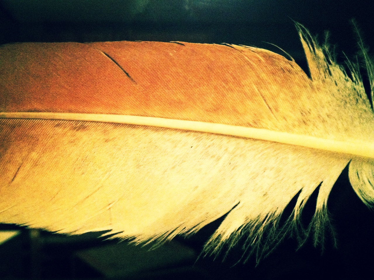 Photograph Feather by Matthew Smith on 500px