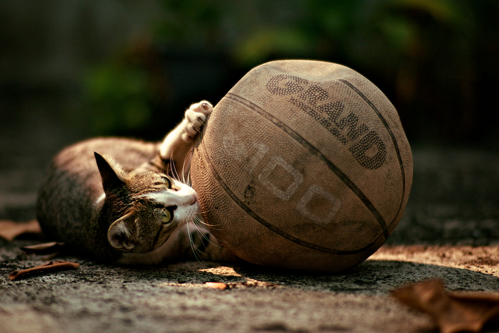 Photograph Cat by Te Montri on 500px