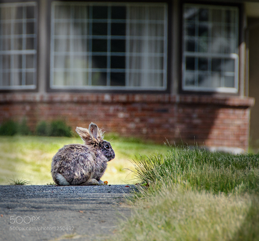 Photograph Guardian Of The House by Derek Galon on 500px