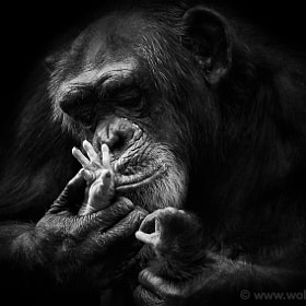 THE LAST KISS by Wolf Ademeit (WolfAdemeit)) on 500px.com