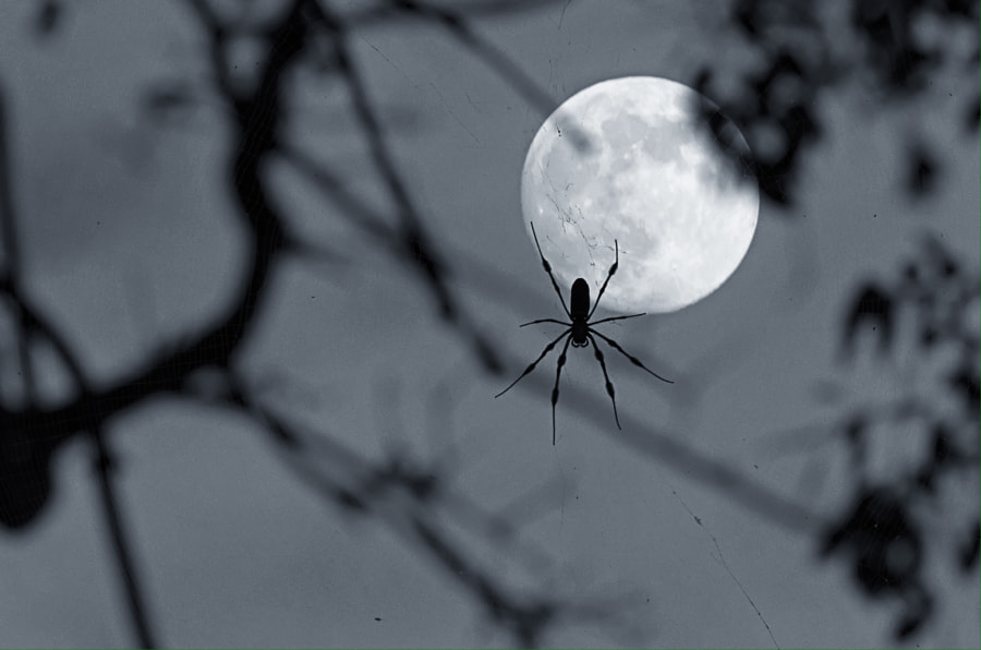 Spider Moon by Audrey Foley on 500px.com