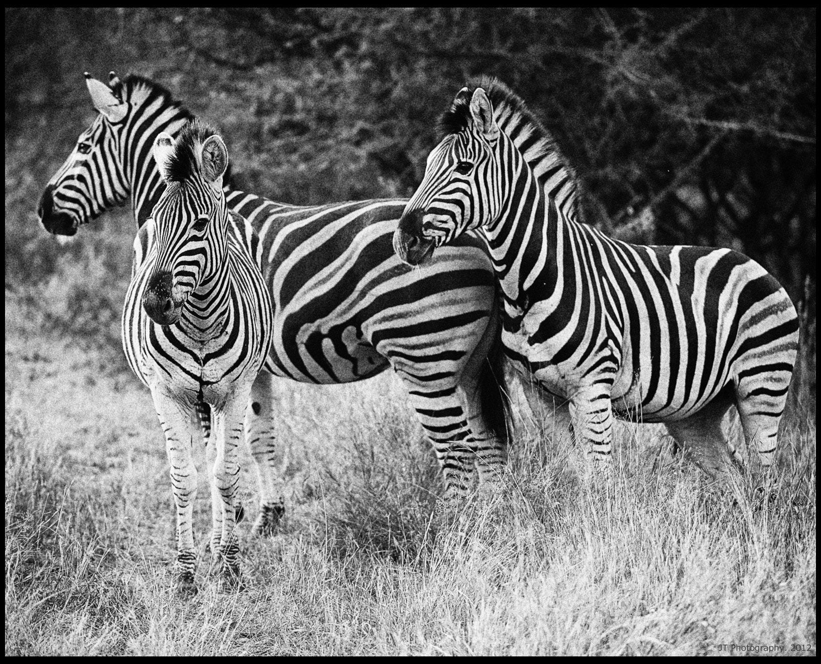 Photograph Black and White by Jason Tiong on 500px