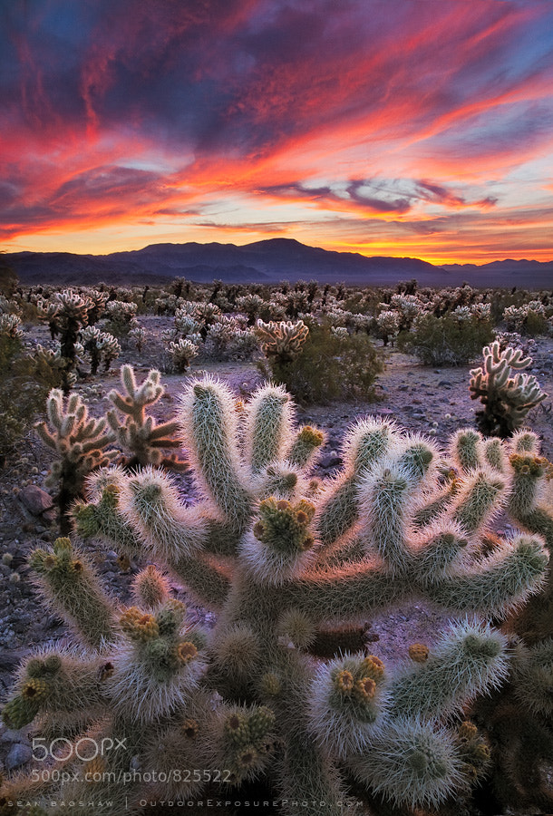 Photograph Desert Symphony by Sean Bagshaw on 500px