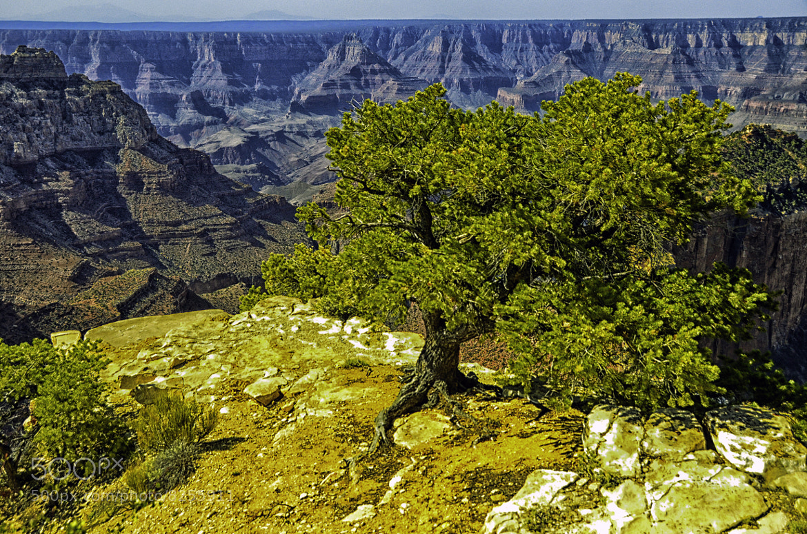 Photograph Life above the North Rim by Greg McLemore on 500px