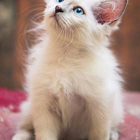 Cute by Faisal Al Nassar (FaisalAlNassar) on 500px.com