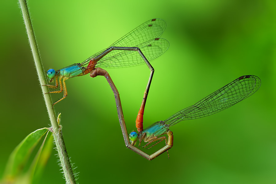 Photograph They are Mating by Danniel Partogi on 500px