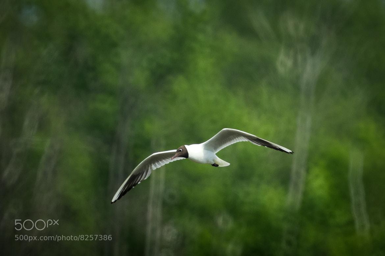 Photograph * * * by Alexander Burmistrov on 500px